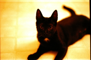 A Photograph Of Ms. Stein As A Kitten, For Comparison's Sake (And Also So That You Can Admire Her General Cuteness)