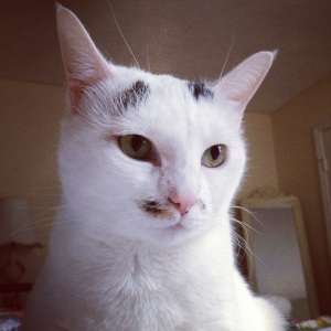 This is a photograph of the feline Alice B. Toklas, who is the hero of today's story.
