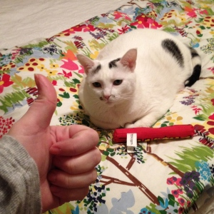 DON'T be ashamed of being a cat lady.  DO remember that your cats are single ladies just like yourself.  DO help them to have the best single Valentine's Day ever too by giving them absurd toys with absurd amounts of catnip in them. DON'T attempt to dance with them to Beyoncé songs.  They will so not like it.  They will hurt your face, they will so not like it.