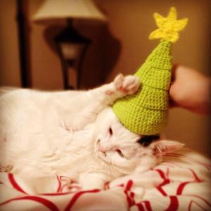CAT CHRISTMAS HAT NO