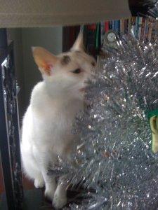 SHINY CAT CHRISTMAS TREE SNACKS